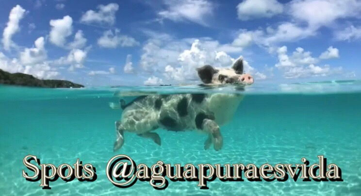 Spots @aguapuraesvida